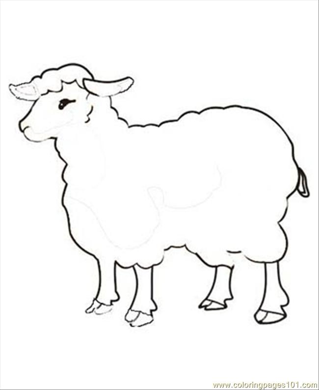 baby sheep coloring pages - photo#32