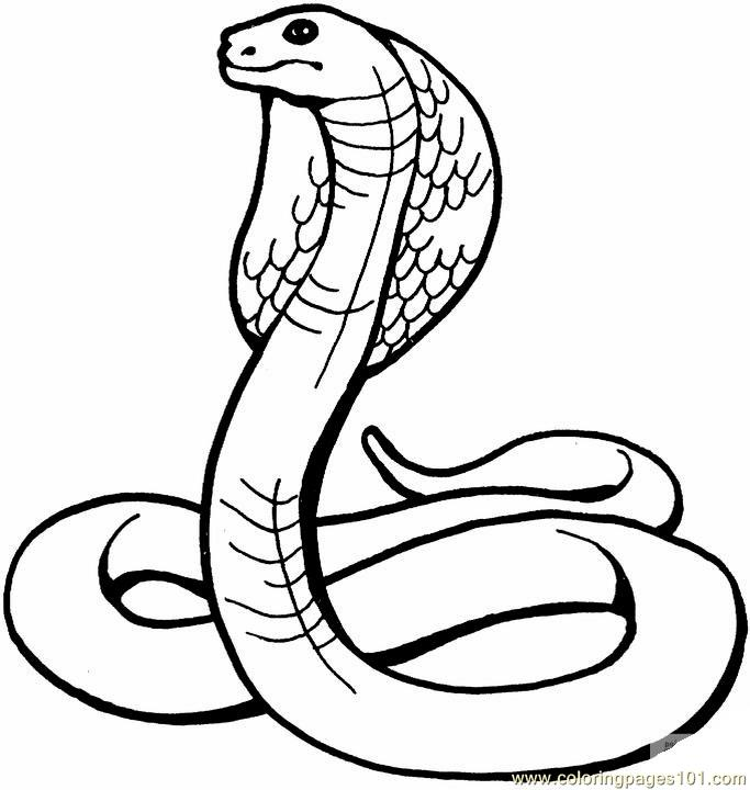 Coloring Pages King cobra Reptile
