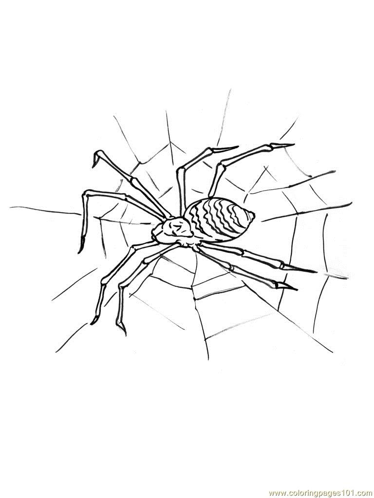 Black Widow Spider Coloring Pages Black Widow Spider Coloring Pages