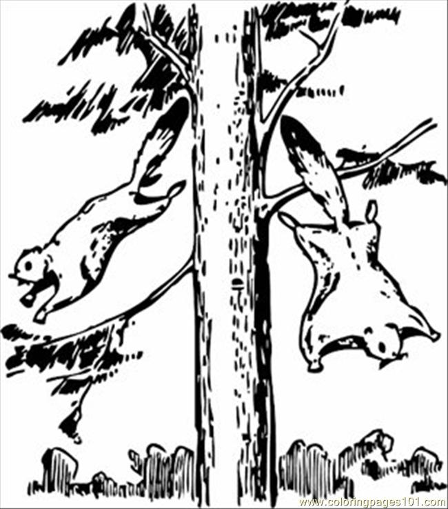Coloring Pages Flying Squirrels