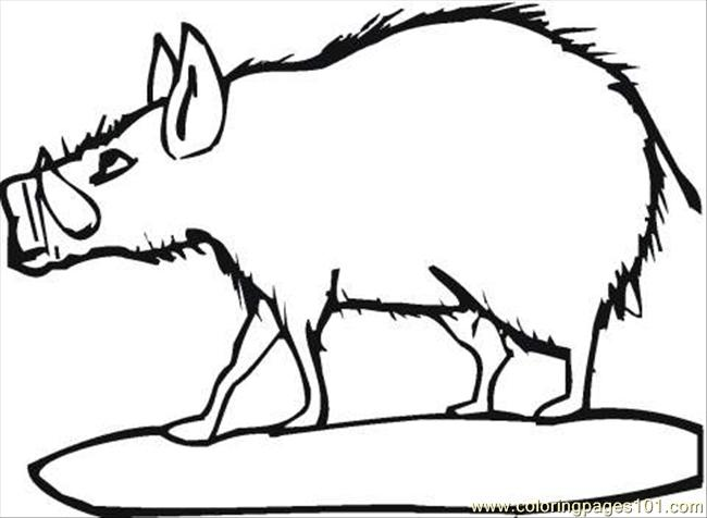 Coloring Pages Wild Boar 2 Coloring