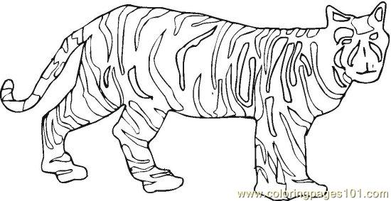 Coloring Pages Lionsandtigers 8