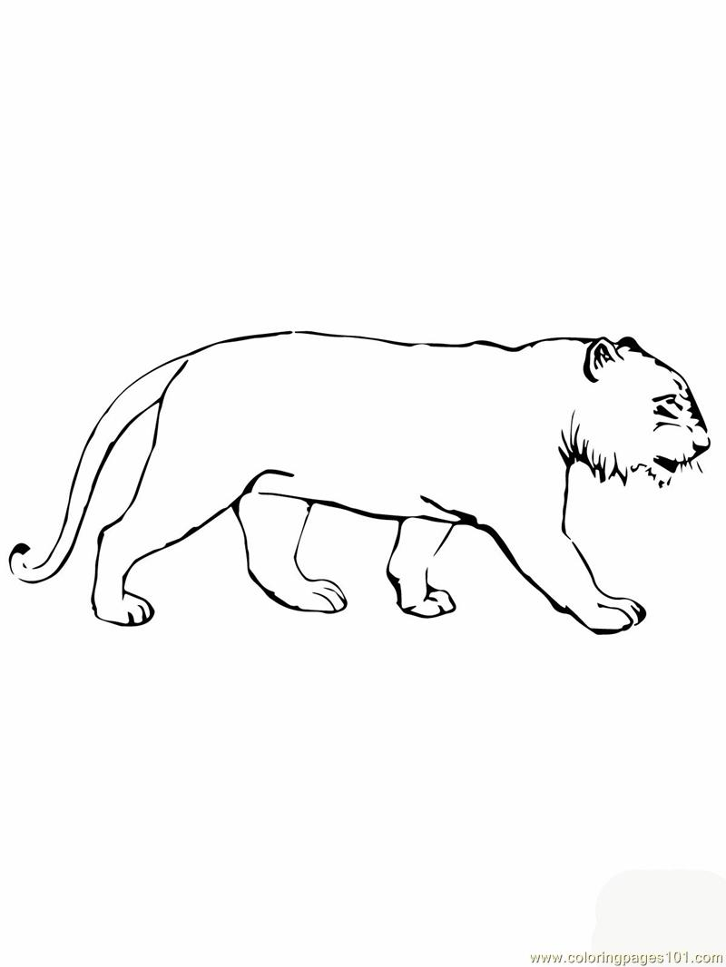 Coloring Pages Tiger without stipes