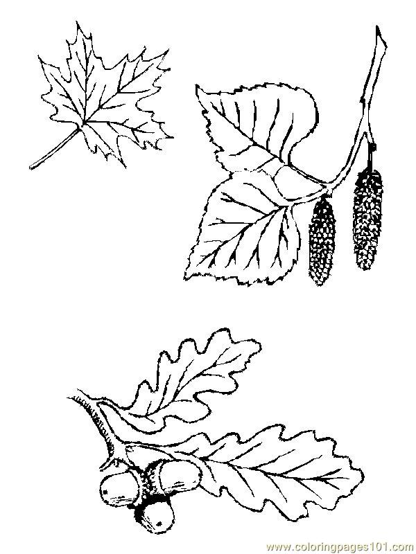 cherry tree coloring page coloring pages