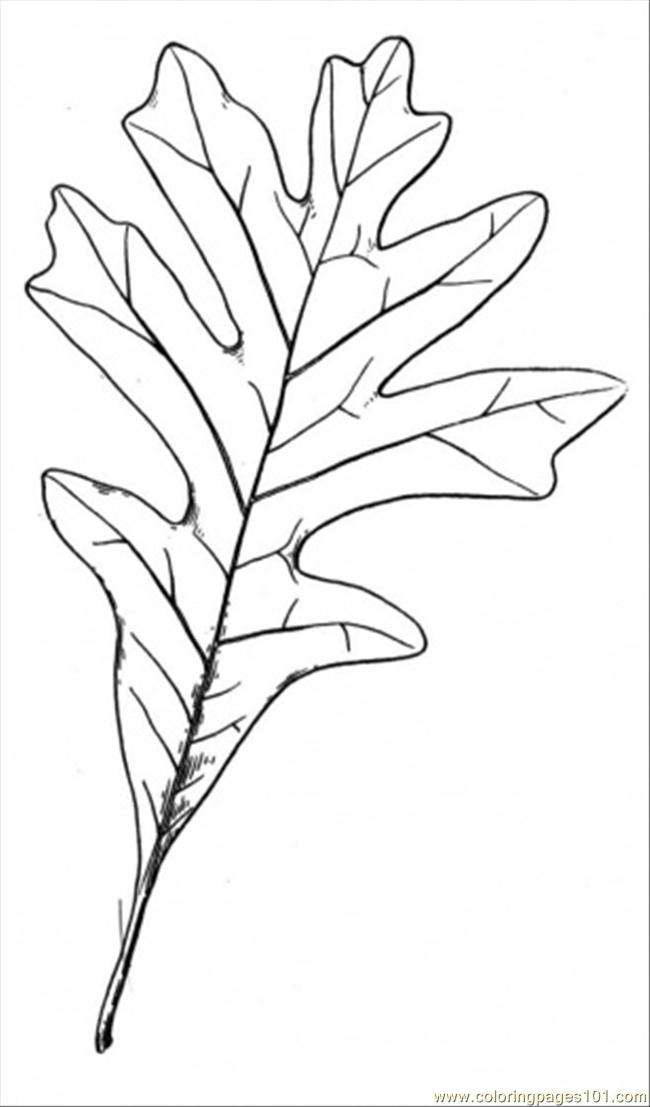 free oak tree coloring pages - photo#25
