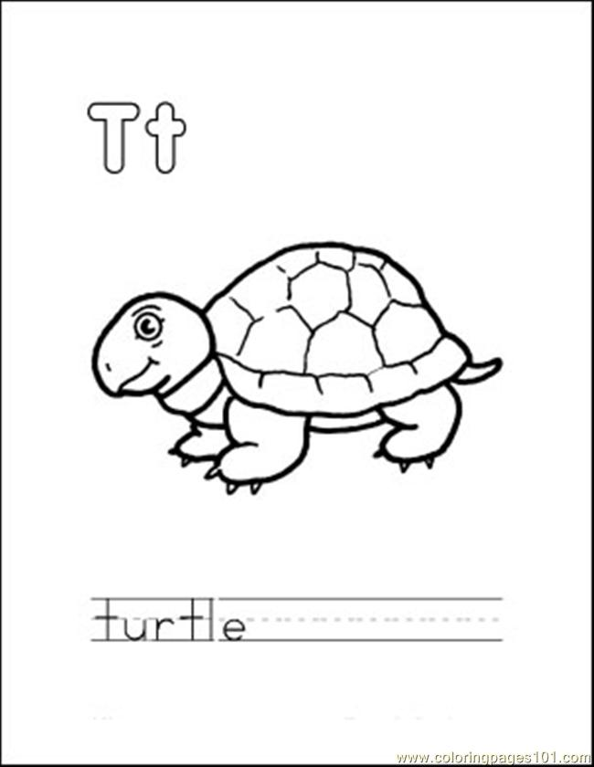 Free eastern box turtle coloring pages for Turtle color