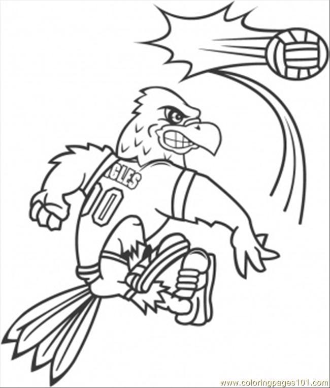volley pollo: