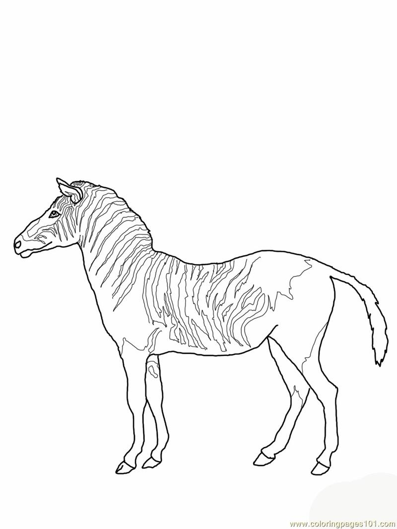 Free Zebra Marty Coloring Pages