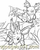 Animals Pokemon